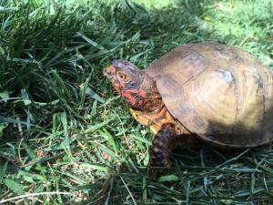Floyd enjoying the sun